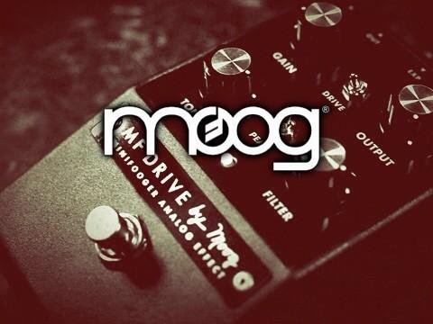 Moog Minifooger Analog Family